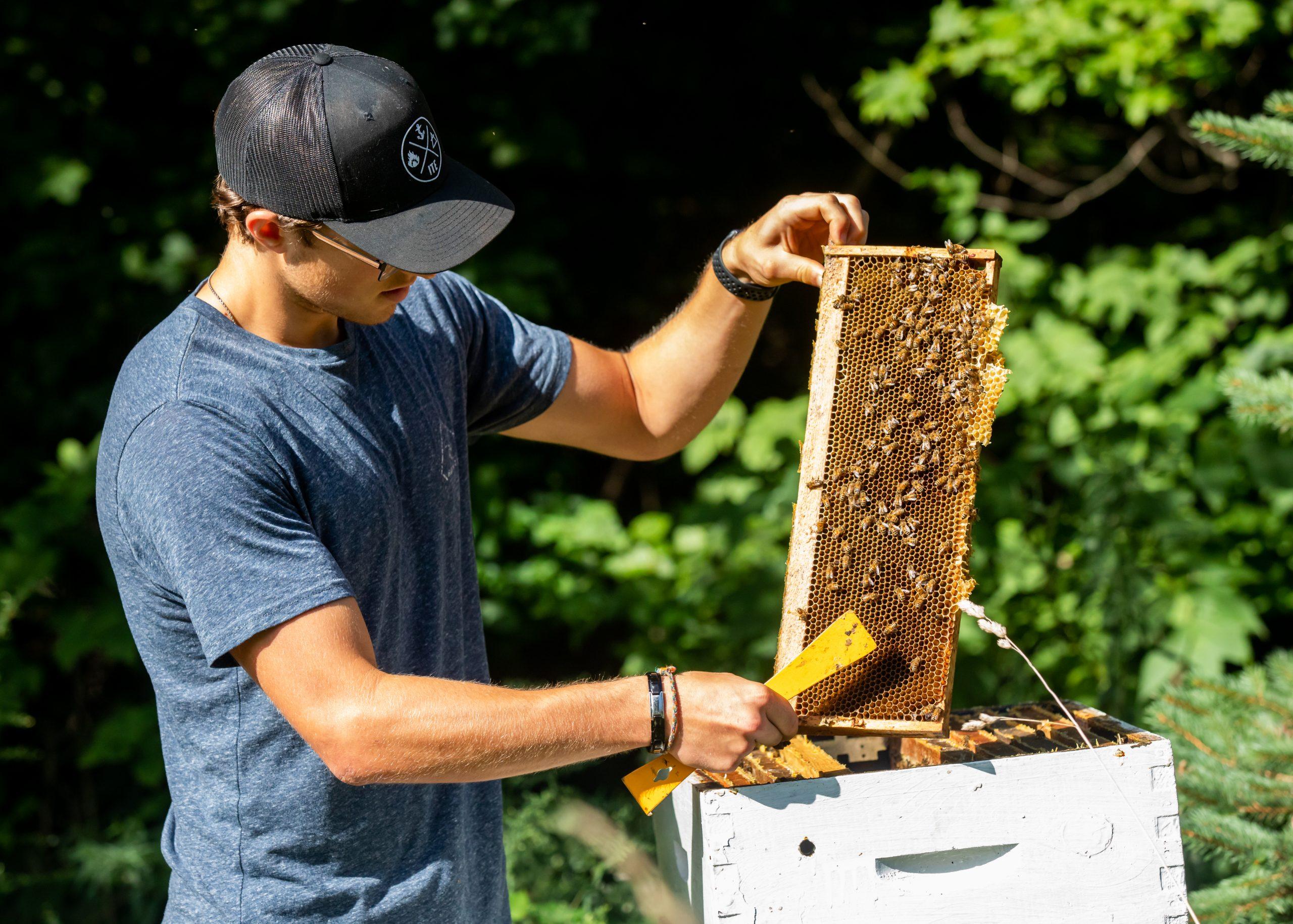 Ontario's West Coast Honey